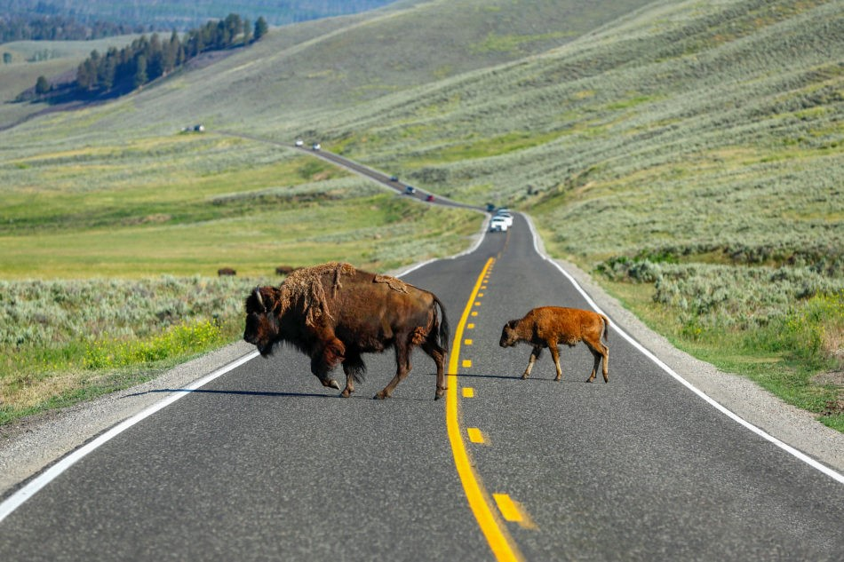 Top 5 Must Do Activities In Montana S Yellowstone Country